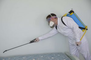 Ace Pest Experts Pest Control