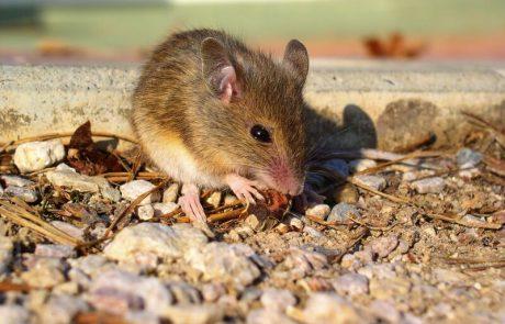 Rat-Control